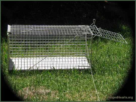 possum cage adjusted for the birds